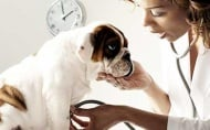 Кои са 5-те най - проблемни породи кучета за ветеринарите?