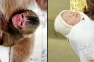 Кръстиха новородена маймунка на кралското бебе Шарлот