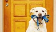Как да направим по-пълноценни ежедневните разходки с кучето?