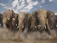 С каква скорост се движи слона?