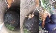 С нечовешки усилия младеж спаси куче от удавяне в кладенец