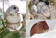 Седемте сладки и очарователни обитатели на остров Хокайдо