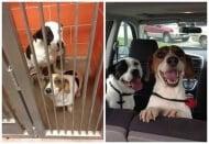 Щастливите изражения на спасени от приюти кучета