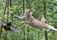 Котешкият скок