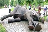 Слон, държан в окови, плаче от радост при спасяването му от 50-годишен плен