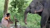 Слон разруши къща, а след това спаси плачещо бебе