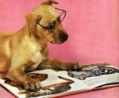 Смешна подборка на четящи кучета