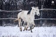 10 снимки, показващи уникалната красота и грация на конете