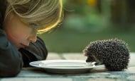 Спиращи дъха моменти с животни, които ни карат да се замислим