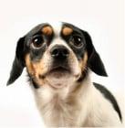 Защо и от Какво се страхуват кучетата?