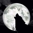 Суеверия, свързани с животните