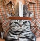 Съветите на една мъдра котка, или най - важните правила за поведение в къщата