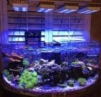 Светлината в аквариума