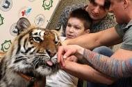 Тигрица помогна на деца, осакатени от войната в Украйна