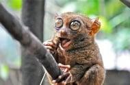 Топ 10 на животните с невероятни очи