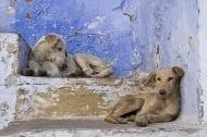 Приеха закона за евтаназия на кучета в Румъния
