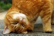 Учени откриват необичайно приложение на котките