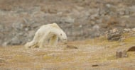 Ето как изглежда глобалното затопляне... тъжната истина