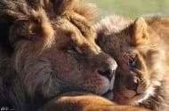 Красиви фотографии на уникалните създания на Майката Природа