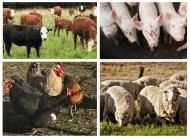 Незаразни болести - Общи за няколко вида животни