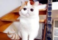 Вижте новата интернет звезда с милиони почитатели - котето Снупи