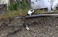 Възхитителната постъпка на една котка, която спасява малкото си