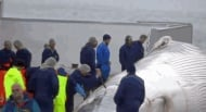 """Заради убийствата на китове """"Анонимните"""