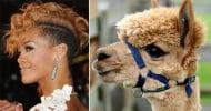 Зашеметяващи прилики между известни личности и животни (втора част)
