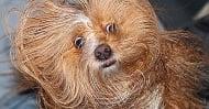 Защо някои кучета не обичат да се къпят?
