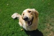 Защо някои кучета се радват дори на непознати хора?