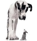 Защо малките кучета се заяждат с по - големите?