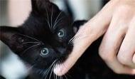 Защо котката понякога хапе докато я галите?