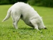 Защо кучетата разравят тревата след като се изходят?