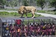 Зоопарк за хора - Вижте какво става, когато хората са в клетки, а животните са свободни