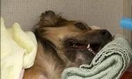 Зоополицията във Варна вече работи, след като вързано куче бе пребито до смърт