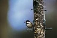 Зимата дойде, нека се погрижим за пойните птици като дарим