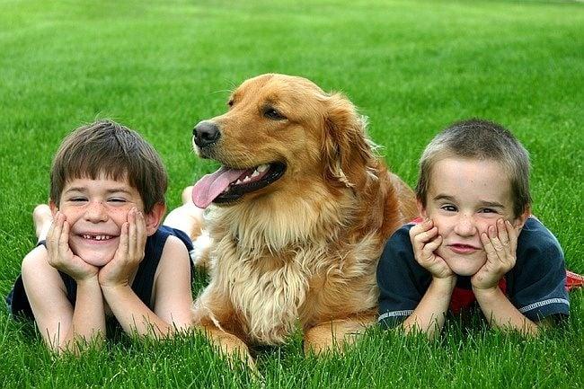 12 причини, поради които всяко дете трябва да порасне с куче (2 част)