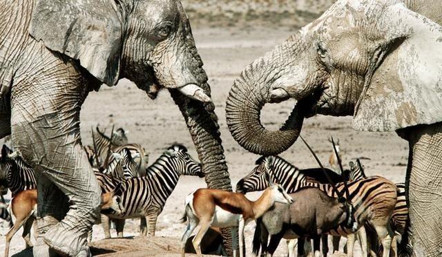 Какво е характерно за бозайниците?