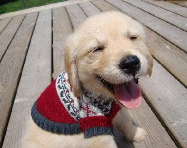 16 щастливи кученца, които гарантирано ще донесат усмивка на лицето ви