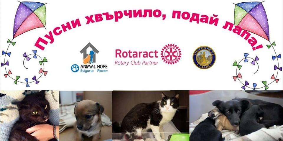 Заповядайте на 2 юли в Пловдив за инициативата в помощ на бездомните животни