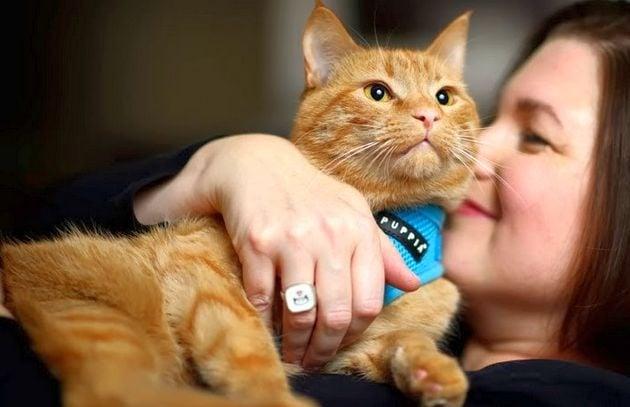 20 научни доказателства, че всеки има нужда от котка в живота си (първа част)