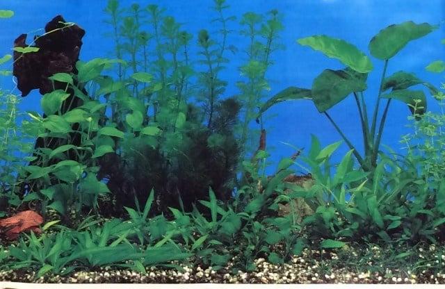 Aqua Nova Плакат едностранен Н-30см; Н-50см; Н-60см ; черен камък с растения