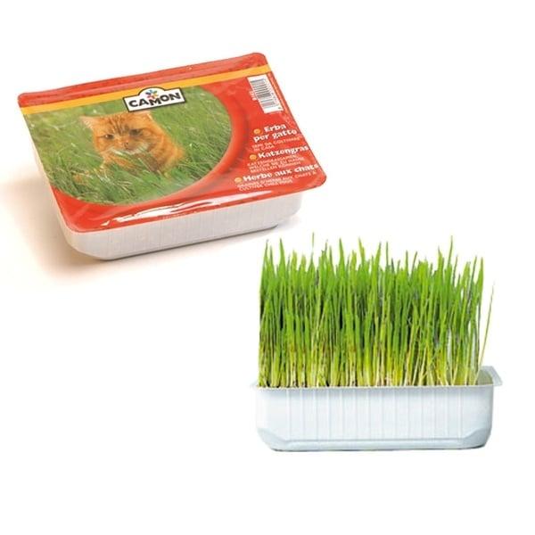 Трева за котки