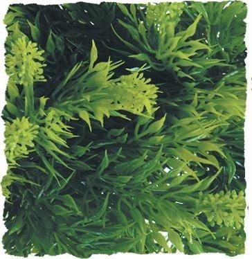 Терариумно растение Zoo-Med - малазийска папрат