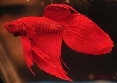Бета Red XL