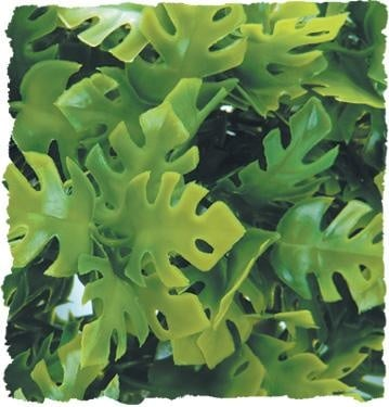 Терариумно растение Zoo-Med - филодендрон