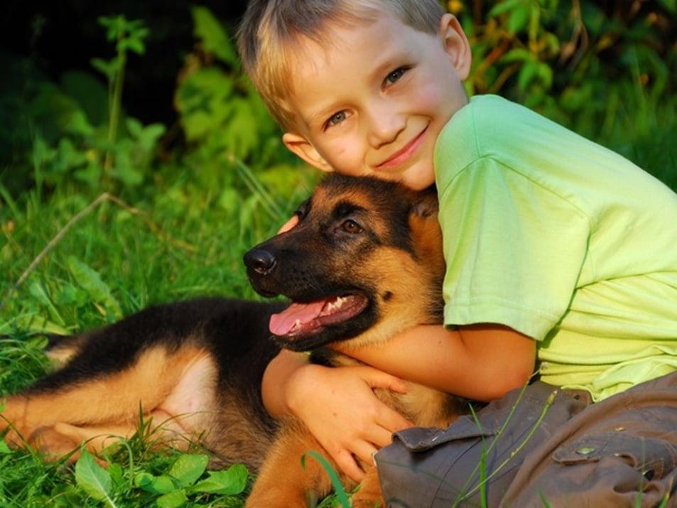 20 причини да боготворите своето куче
