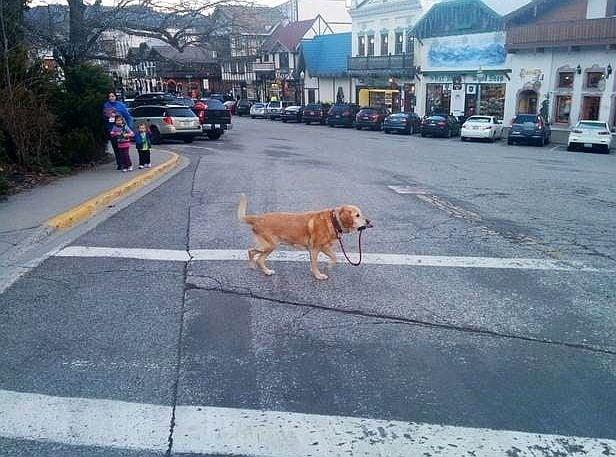 25 смешни самостоятелни кучета, които нямат нужда от стопанин