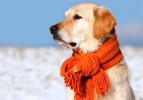 5 популярни мита за кучетата през зимата