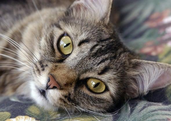 Ако котката ви прави тези 10 неща, значи ви обича истински!